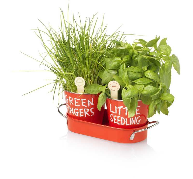 Pěstujte vlastní bylinky