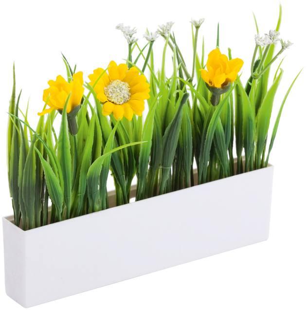 Botania dekorativní rostliny