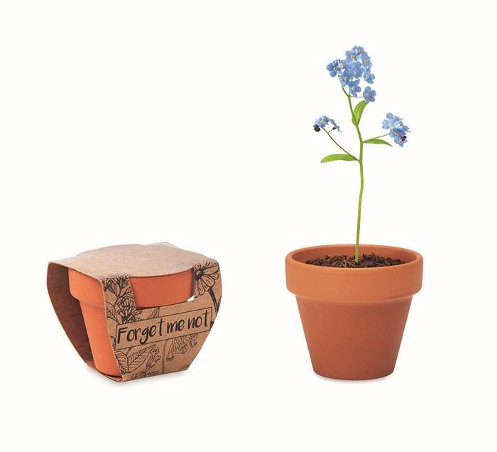 Terakotový květináč - pomněnka